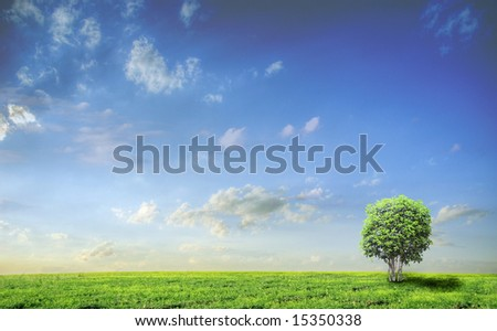 Meadow with green grass and blue sky with clouds and tree