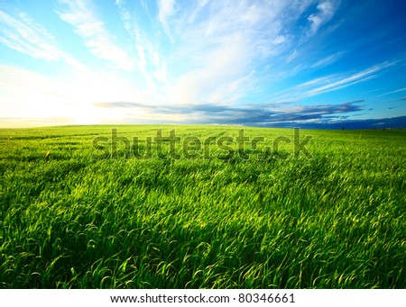 Meadow with green grass and blue sunset sky with clouds