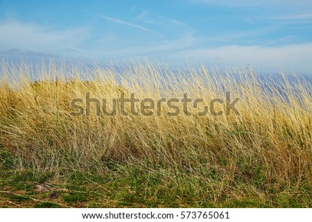 Meadow with tall dryed out grass in the autumn