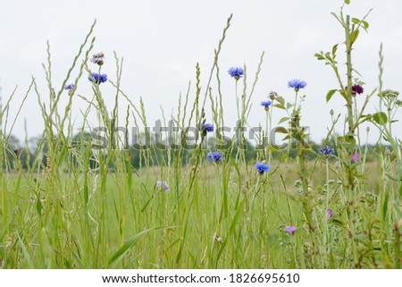meadow with tall grass and colorful wild flower stock photo