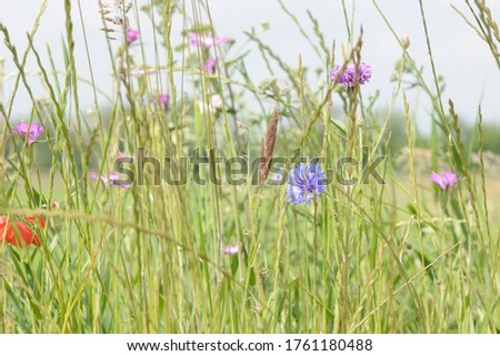 meadow with tall grass and colorful wild flowers stock photo