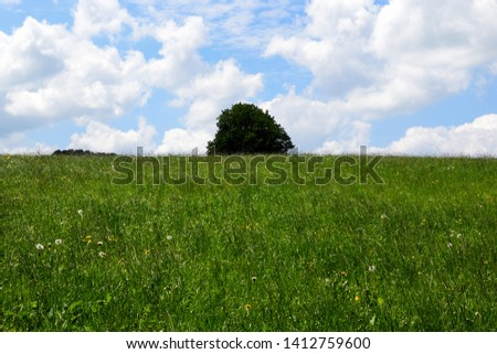 Meadow with tree in the background, field of green grass and blue sky