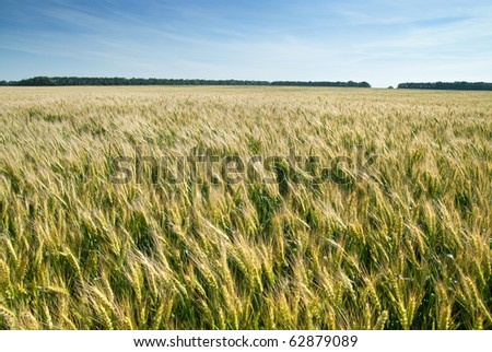 meadow with wheat