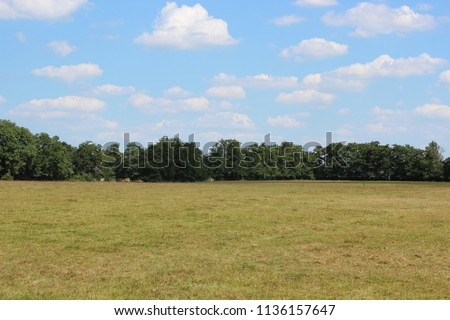 Meadow with wide view of a forest edge, photo made on a summer day.