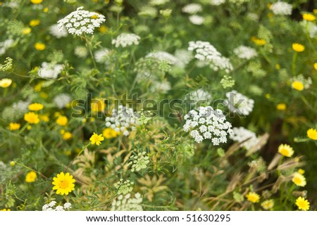 Meadow with yellow and white flowers