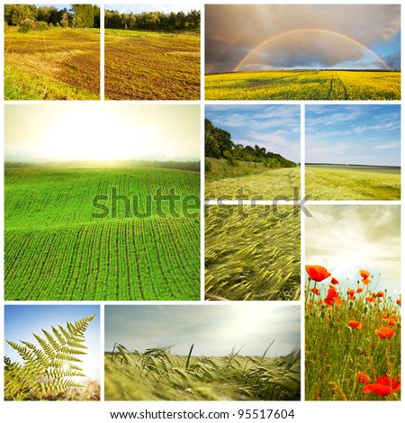 meadows and fields collage