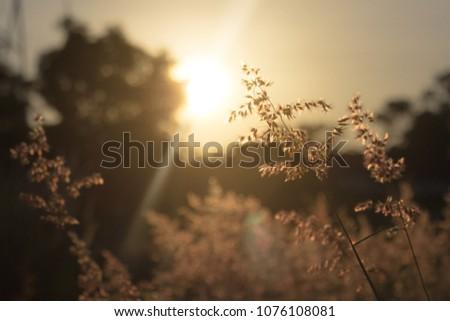 meadows at sunrise #1076108081