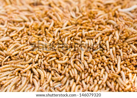 Meal worms is the common name for the larvae of the beetle Tenebrio molitor.