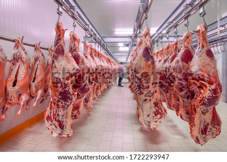 Meat industry,meats hanging in the cold store. Cattles cut and hanged on hook in a slaughterhouse. Halal cutting. Сток-фото ©