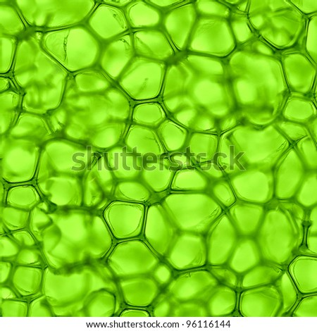 Medical Macro Cells Background