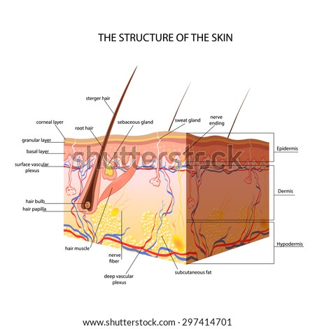 medical skin structure