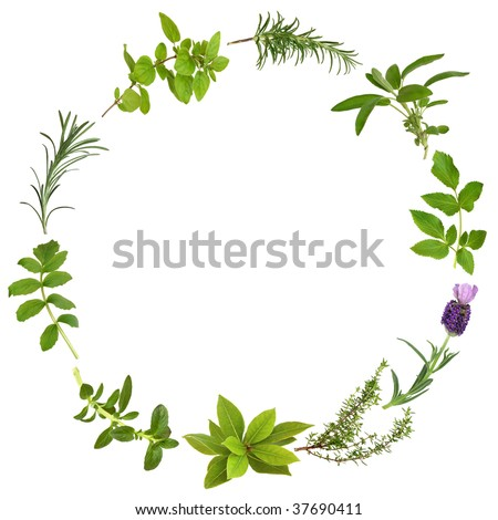 Medicinal and culinary herbs in an abstract circular design, over white background.