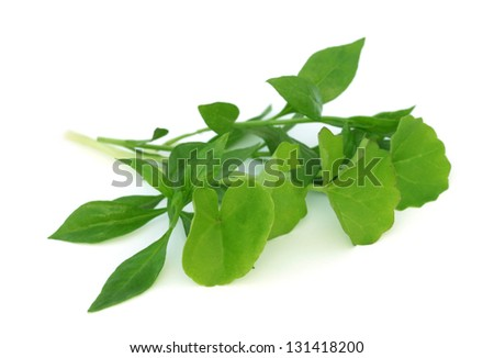 Medicinal herbs � henna with thankuni over white background