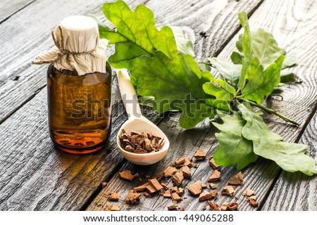Medicinal plant oak (Quercus). Branch, tincture and oak bark in a scoop on a dark wooden table. In herbal medicine used the bark, leaves and acorns (used as a substitute for coffee). Selective focus