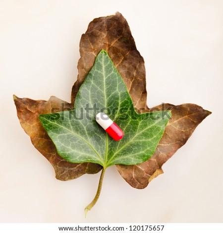 Medicine over green leaf on top of a dried leaf symbolizing vitality