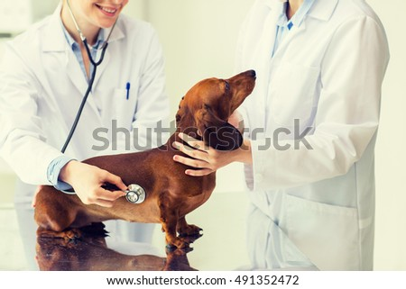 medicine, pet, animals, health care and people concept - close up of veterinarian doctor with stethoscope examining dachshund dog at vet clinic