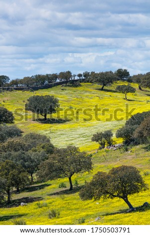 Mediterranean forest in Sierra de San Pedro Mountain Range of Caceres province in Extremadura Autonomous Community of Spain in Europe