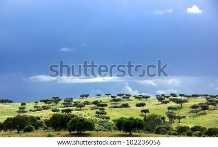 Mediterranean forest of oak trees