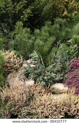Mediterranean garden detail