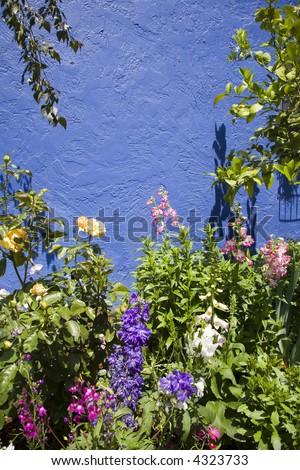 Mediterranean garden with a blue wall background