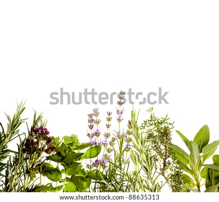 Mediterranean herbs on pure white background: lavender, sage, oregano, thyme. Spring and summer concept; cooking concept. Copy space.
