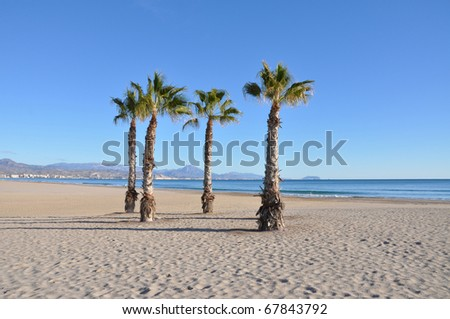 Mediterranean San Juan Costa Blanca Alicante Spain Beach Palm Trees with view of Benidorm Skyline in the background at Dusk - stock photo