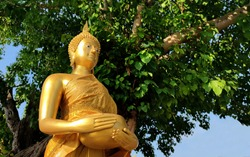 Medium shot Buddha statue with raw of Brass. Hand of buddha statue holding monk's alms bowl with bodhi tree background.  Buddhist believe and merit or Calm and meditation. Thai Culture. Copy space.