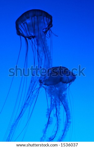 Medusas - stock photo