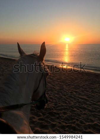 meeting of dawn and dawn with a horse #1549984241
