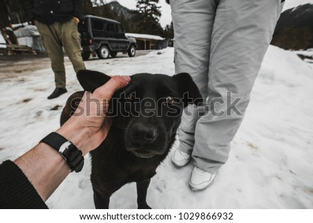 meeting with a dog in winter #1029866932