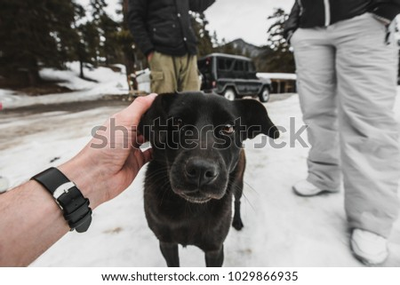 meeting with a dog in winter #1029866935