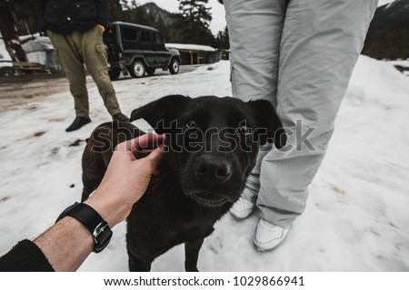 meeting with a dog in winter #1029866941