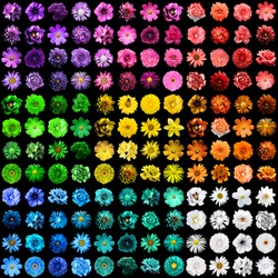 Mega pack of 144 in 1 natural and surreal blue, yellow, red, green, orange, turquoise, violet and pink flowers isolated on black