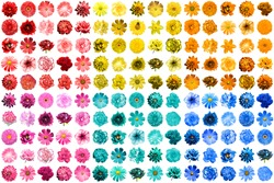 Mega pack of 150 in 1 natural and surreal blue, yellow, red, pink, turquoise and orange flowers isolated on white