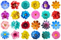 Mega pack of natural and surreal blue, orange, red, turquoise, yellow, white and pink flowers isolated on white. High quality detailed photo