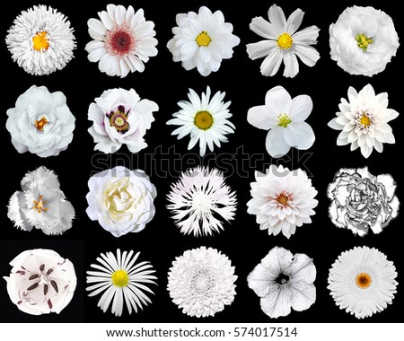 Stock Photo Mega pack of natural and surreal white flowers 20 in 1 isolated on black