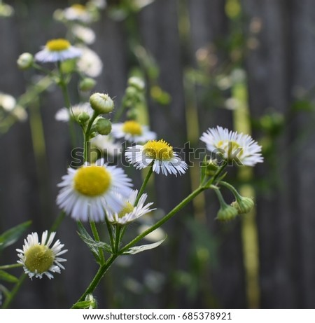 Free photos small white flowers with yellow in middle avopix melanie i choose you beautiful small white flowers with many thin petals and large mightylinksfo