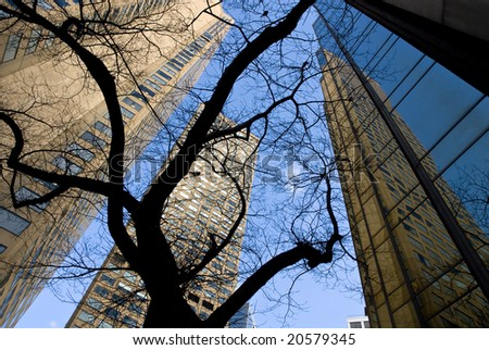 Melbourne office towers with tree silhouetted in foreground - stock photo