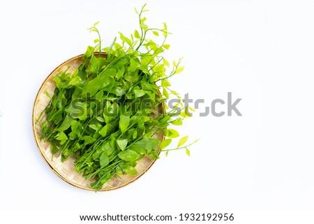 Melientha suavis pierre leaves on white background. Stock fotó ©