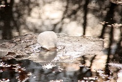 melting snowball, wet surface. reflections of trees as background. spring begin