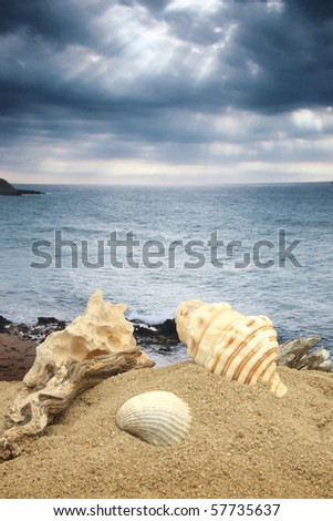 Memories of the Mediterranean Sea, still life with seashells and photo sea photo on background