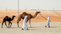Men and Camel at Liwa Desert Abu Dhabi UAE