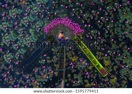 Men and children pick lotus flowers in swamps, swamp has 3 boats.Aerial view of drones