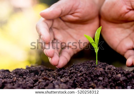 Men hands are planting the seedlings into the soil.
