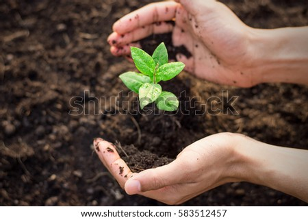 Men hands are planting the seedlings into the soil, ecology concept. #583512457