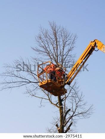 men in a crane cutting down a tree