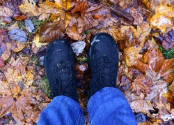 Men's feet in hiking shoes on a background of wet autumn leaves in forest. Rain footwear for man or woman. Trekker boots for for cold and weather hike . Pair of waterproof travel shoe in blue jeans