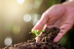 Men's hands are planting seedlings into fertile soil.