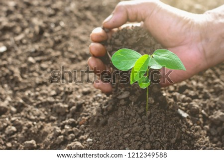 Men's right hand planting seedlings into the soil, ecology concept. #1212349588