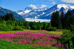 Mendenhall Glacier Viewpoint with Fireweed in bloom